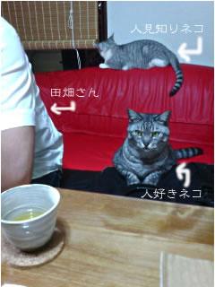 お客さんとネコ