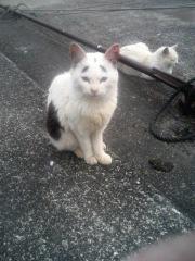 困った眉毛猫