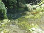 柿田川湧水1
