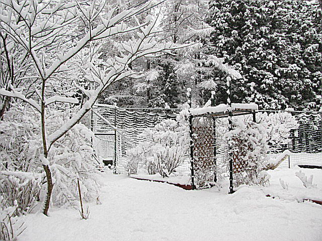 09.4.2大雪-2