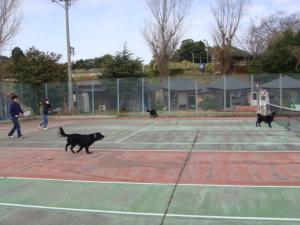 淡路テニス1(縮)