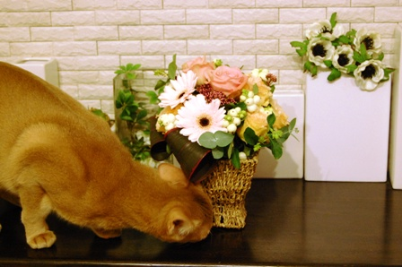 花とアッシュ