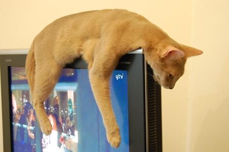 テレビを観る…?
