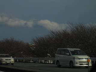 桜090328