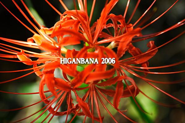 higan-10.jpg