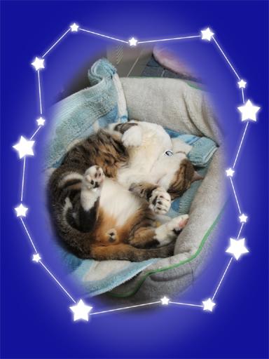おやすみ…