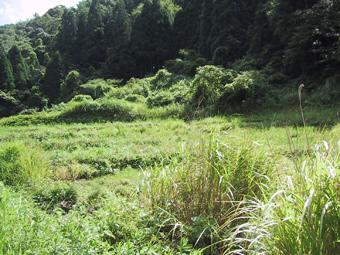 nakanoyama.jpg