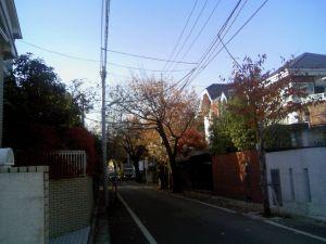 成城の紅葉