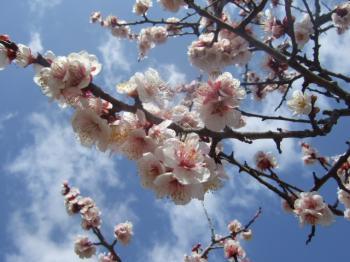 2009_0312甲山森林公園0019