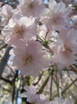 2009_04114月のお出掛け♪20018