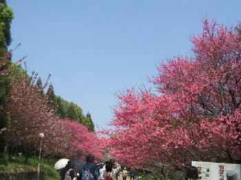 2009_0412鶴見緑地で桜&チューリップ0035