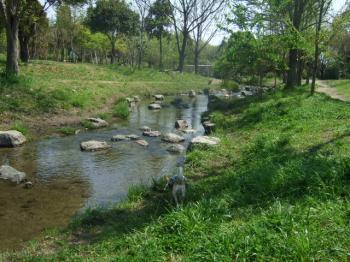 2009_0412鶴見緑地で桜&チューリップ0003