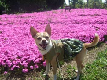 2009_0412鶴見緑地で桜&チューリップ0012