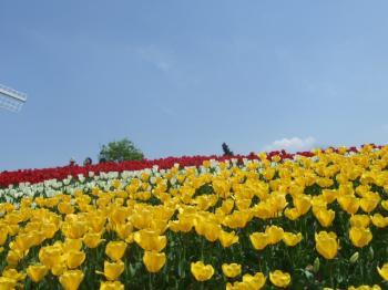 2009_0412鶴見緑地で桜&チューリップ0043