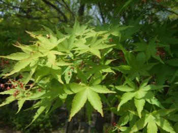 2009_0412鶴見緑地で桜&チューリップ0048
