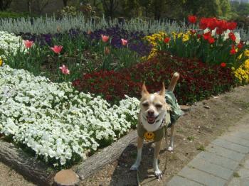 2009_0412鶴見緑地で桜&チューリップ0049