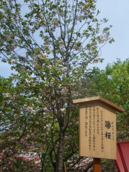 2009_0417造幣局の通り抜け'090055