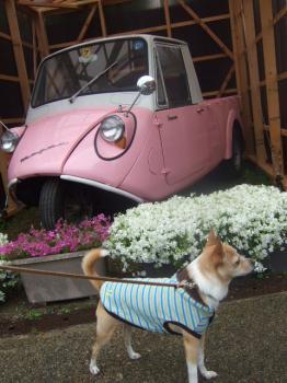 2009_0426花のじゅうたん♪0003