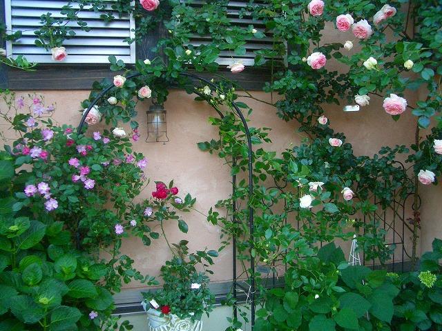 0900514 Best Roses 008