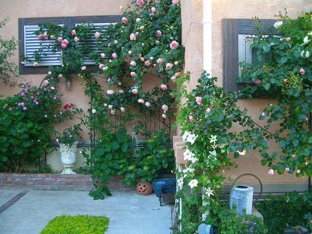 0900514 Best Roses 005