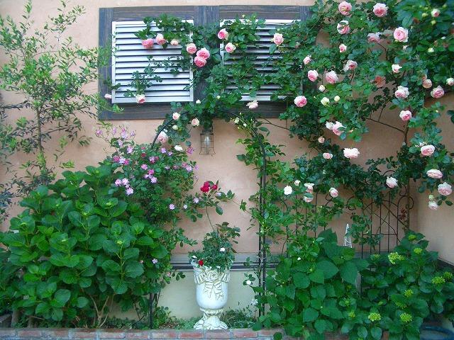 0900514 Best Roses 007