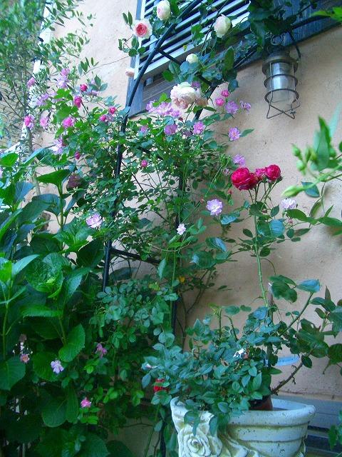 0900514 Best Roses 014