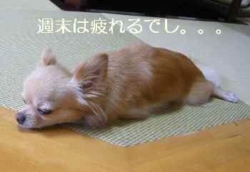 blog2011090403.jpg