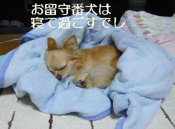 blog2011090504.jpg