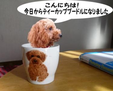 P1010389_edited-1.jpg