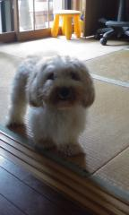 Beauty dog 009