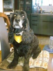 Beauty dog 023