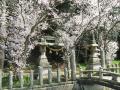 満開の桜02
