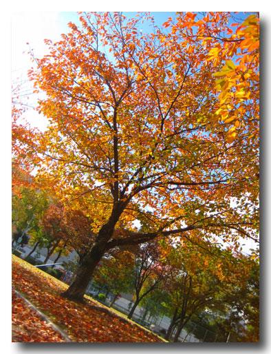 2008-11-20-007360.jpg