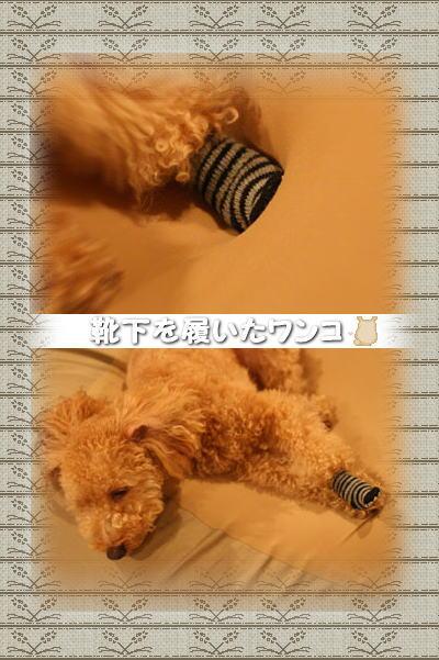 2008-11-3-1-1.jpg