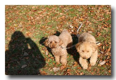 2008-12-3-060360-1.jpg