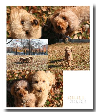 2008-12-3-1.jpg