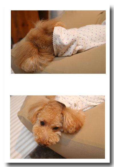 2008-12-5-1.jpg