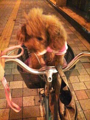 自転車で②