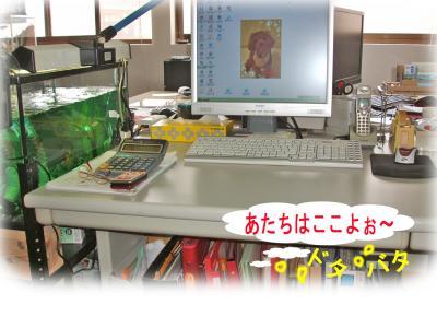 0004_convert_20090601214910.jpg