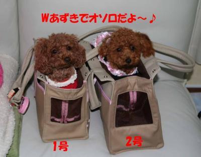 022602_convert_20090226235155.jpg