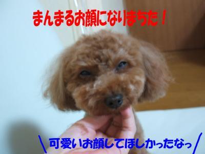0812013_convert_20080813012145.jpg