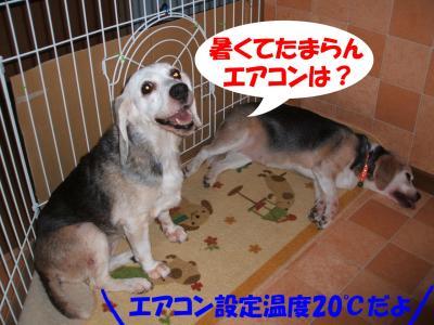 081201_convert_20080813011623.jpg