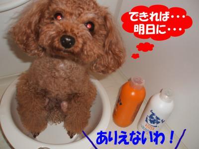 081206_convert_20080813011859.jpg