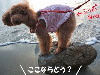 0817011_convert_20080818010515.jpg