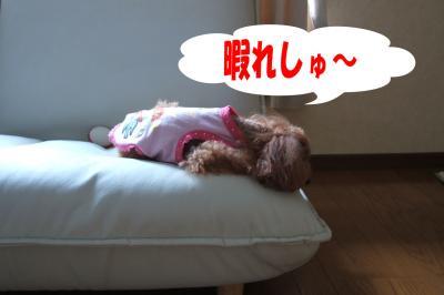 090203_convert_20080903004300.jpg