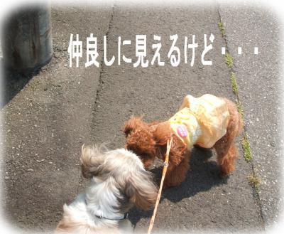 10_convert_20090618142500.jpg