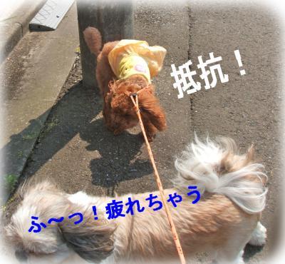 12_convert_20090618142648.jpg