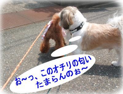 5_convert_20090618142149.jpg