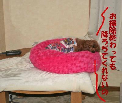 6_convert_20090405010101.jpg