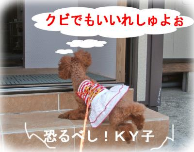 8_convert_20090618142333.jpg